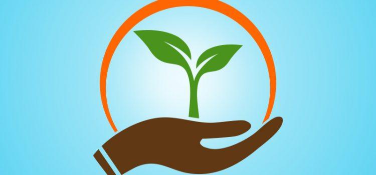 Entrepreneurial trees, watered by philanthropy, bears fruit